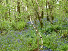 Ash Woodland, Marble Arch Caves Geopark, Co. Fermanagh