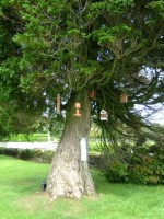 Bird feeders hanging from one of the trees in the friary cemetery, Kildare town