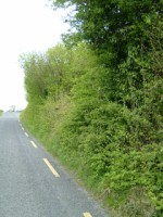 Roadside hedgerow in Co. Clare