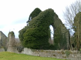 Kildare Friary covered in ivy, Kildare town, Co. Kildare
