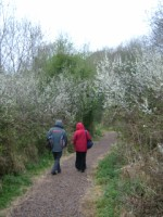 People enjoying a walk through blackthorn trees, Lough Gur, Co. Limerick
